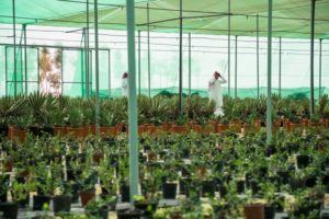 Trees, plants nursery for 2022 world cup stadiums preparation