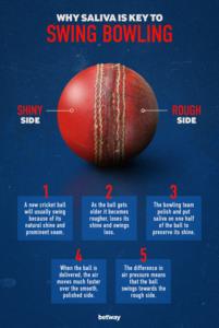 Saliva in cricket